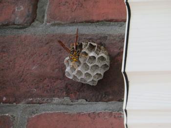ハチの巣2019.png